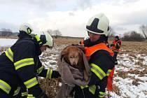 Hasiči na Táborsku zachránili letos již druhého psa, pod kterým se prolomil led. Snímek je z předchozího zásahu z Mladé Vožice.
