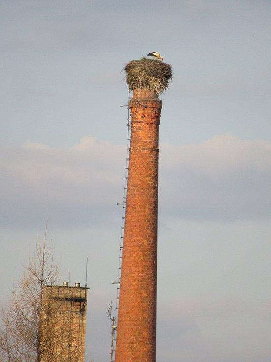 Samec čápa bílého v Budislavi již očekává přílet své družky.
