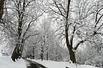 Příměstská část Klokoty, v jejímž katastru se vítězná lipová alej nachází, loni oslavila 800 let od svého založení. Takto jí sluší sněhový šat.