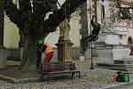 Jírovce na Žižkově náměstí v Táboře se dočkaly ošetření.