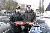 Baštýř Jiří Šich s kolegou Josefem Kučerou se chlubí ukázkovými kapry z Nového rybníka z Hlavatců.