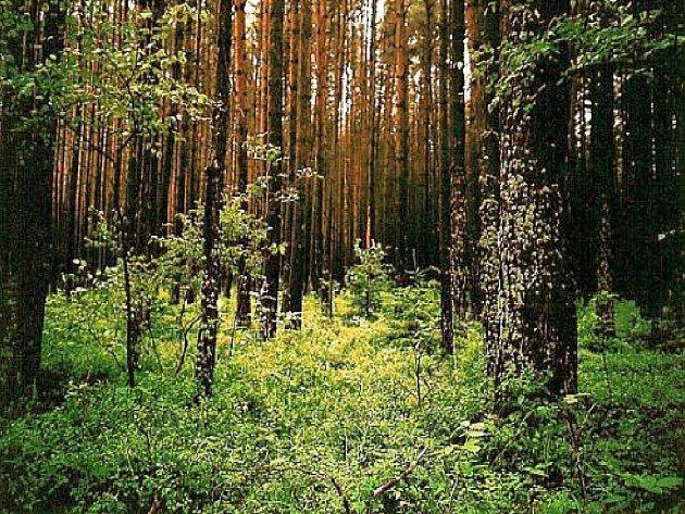Les u Želče