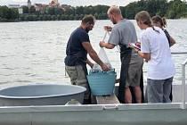 Celkem 240 kg dravých ryb a kapra vrátili vědci zpět do nádrže Jordán.