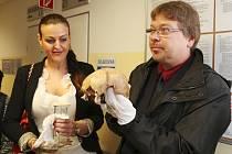 V pondělí dopoledne se kalva Jana Žižky v táborské nemocnici podrobila CT skenování.