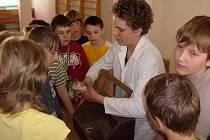 Kamil Stejskal si nedávno připravil pro svoje spolužáky malou výstavu domácího zvířectva. Nápad sklízel velký úspěch, obzvlášť u těch nejmenších.