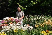 Josef Basík rád jezdí na výstavy a vrací se do ráje cibulovin – Holandska. Jeho favoritem jsou lilie, ale ve svém zahradnictví má úžasné množství cibulovin, trvalek i skalniček.