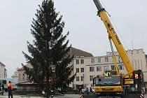 Vánoční strom v pondělí dorazil na Žižkovo náměstí.