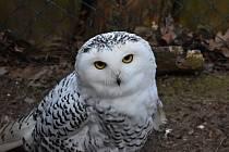 Pták z čeledi puštíkovitých a ohrožený druh si náramně vychutnal pozornost fotografa.
