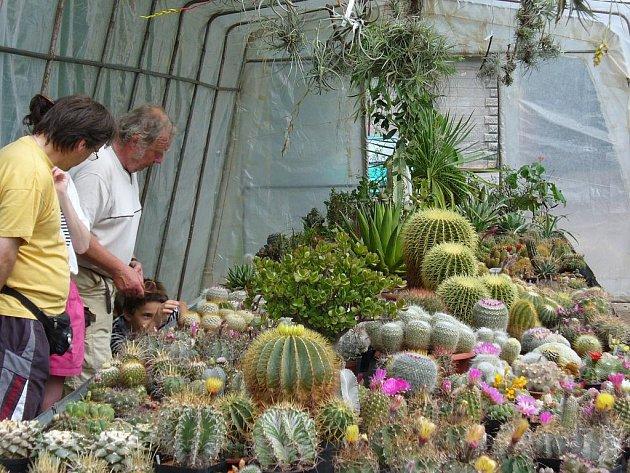 Výstava je pro kaktusáře příležitostí, kdy představit své krasavce nebo některé exempláře prodat.