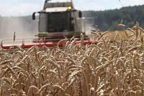 Zemědělci už mají  sklizený ječmen, nyní jsou na řadě pšenice a řepka.
