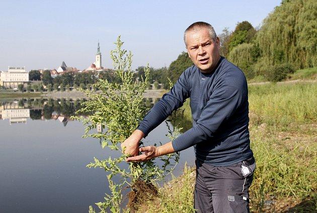 Useknout trávu pár centimetrů nad zemí a kořen nechat v zemi podle Blahoslava Maršálka (na snímku) nestačí. Tráva má podle něj zcela zmizet.