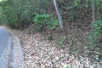Stromy letos přišly o listy podstatně dřív. Do přírody tak již vstoupil podzim, jako v Táboře na cestě kolem Lužnice.