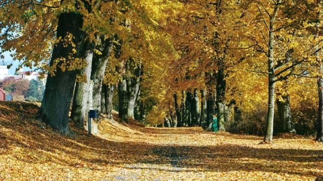 Klokotská alej na podzim.
