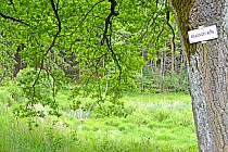 Vypuštěný Mlýnský rybník .