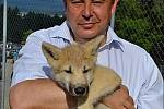 Evžen Korec s mládětem vlka arktického.