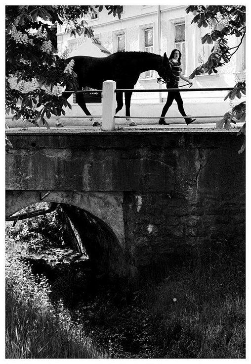 Dana Petřičková a její kůň Sary.