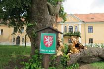 Téměř 300 let starý majestátní strom šel 24. června k zemi. Z táborských Měšic zřejmě zmizí nadobro, je nebezpečný okolí.