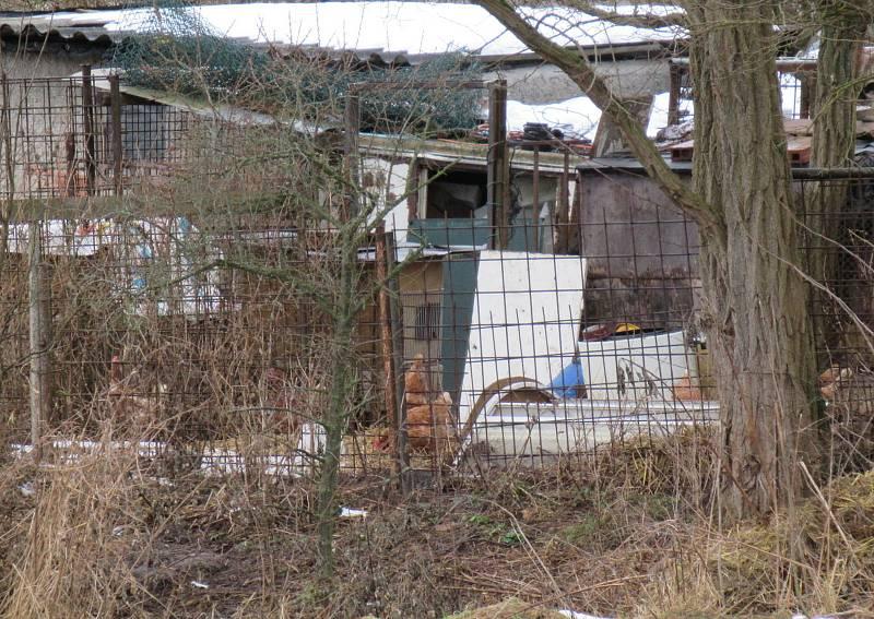 V malochovu drůbeže V Dlouhé Lhotě odhalila Státní veterinární správa první ohnisko ptačí chřipky na Táborsku. Nákazu do chovu nejspíš zavlekly divoké kachny z Návesního rybníka.