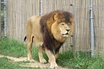 Zoo Tábor. Ilustrační foto.