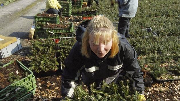 Stovky nezaměstnaných lidí na jihu Čech dostaly v březnu práci zejména díky typickým sezonním pracím v lese, stavebnictví či službách.