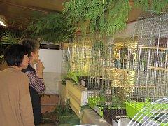 Papoušci v botanické zahradě v Táboře.