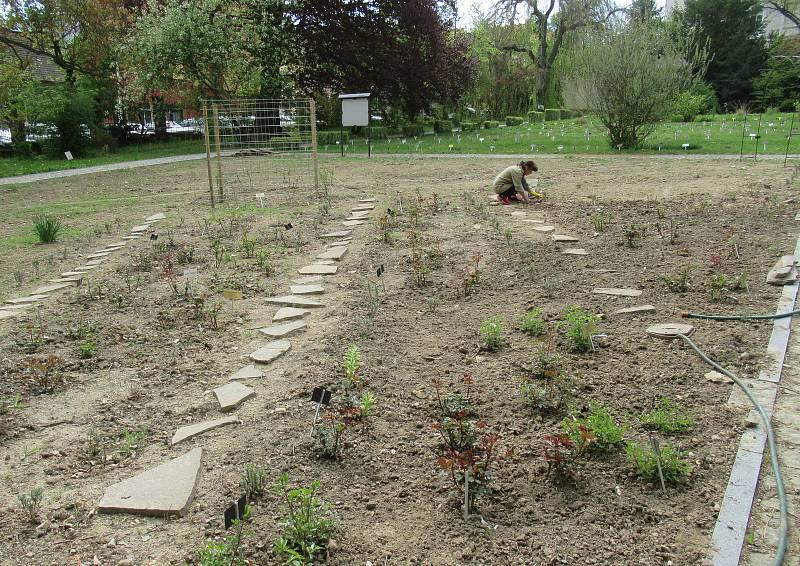 Návštěvník může v arboretu obdivovat evropské a cizokrajné dřeviny. Hlavní výzkumný program představuje užitkové rostliny. Zahrada je volně přístupná bez výběru vstupného.