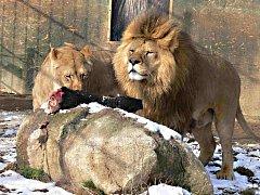 Ilustrační foto z táborské zoo