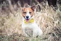 Sedmiletý pes jako jediný obyvatel táborského útulku čeká na adopci.