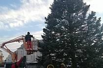 Kdo pomůže a jeho darovaný strom se letos stane vánočním symbolem na Žižkově náměstí?