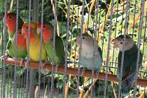 Táborská botanická zahrada hraje barvami.