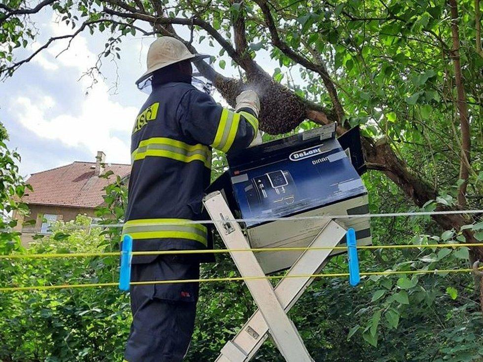 Hasiči v Táboře odstraňovali roj včel.