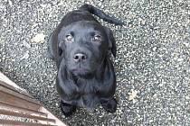 Táborský útulek pro psy najdete ve Vápenné strouze