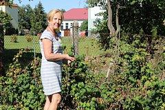 Miloslava Kvasničková už letos zasadila jen brambory.