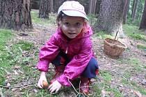Po téměř dvouhodinovém chození po lese jsme si odnesly babky na dně košíku a pár holubinek. Naši pozornost a zejména pozornost malé Klaudie upoutaly muchomůrky na kraji lesa.