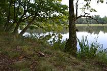 První mykologická rezervace v Čechách se nachází u rybníka Luční poblíž Turovce. Založena byla v Československu již v roce 1988.