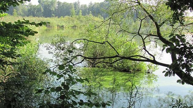 Přírodní památkou je Nový rybník u Soběslavi už od roku 1949.