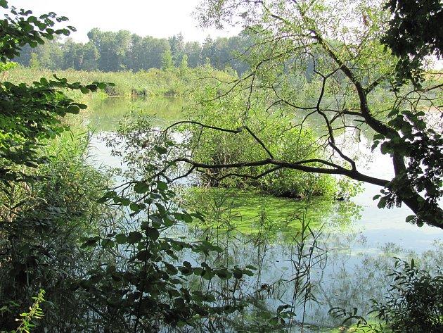 Nový rybník u Soběslavi.