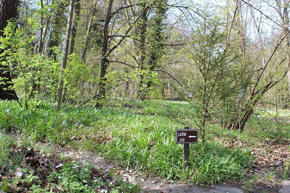 Táborská botanická zahrada už kvete.