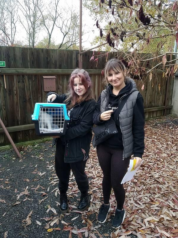 Útulek Tábor pro psy a kočky je velmi úspěšný v oblasti hledání nového domova, díky snímkům od profesionálního fotografa a webovým stránkám letos již našlo domov přes sto koček.