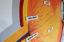 Výstava pomocí optických klamů vysvětlí fungování světla. Ilustrační foto