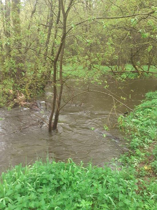 Zvýšenou hladinu měl i dvanáctihektarový rybník Starosta na Dírenském potoce poblíž Mezné na Soběslavsku.