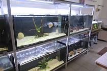 Střední odborná škola ekologická a potravinářská ve Veselí nad Lužnicí ve středu 27. listopadu opět otevře dveře veřejnosti a zájemcům o studium.
