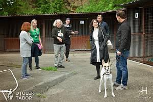 """Příběh hlavního hrdiny knihy Filipa Rožka """"Gump: Pes, který naučil lidi žít"""" má pokračování."""