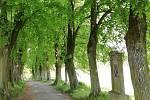 Lipová alej s křížovou cestou vede od klokotského kláštera směrem k Tismenickému údolí. Cesta byla založena benediktiny koncem 17. století, alej pak byla vysázena v roce 1836. Od roku 1973 patří mezi chráněné památné stromy. Tvoří ji celkem 97 stromů.
