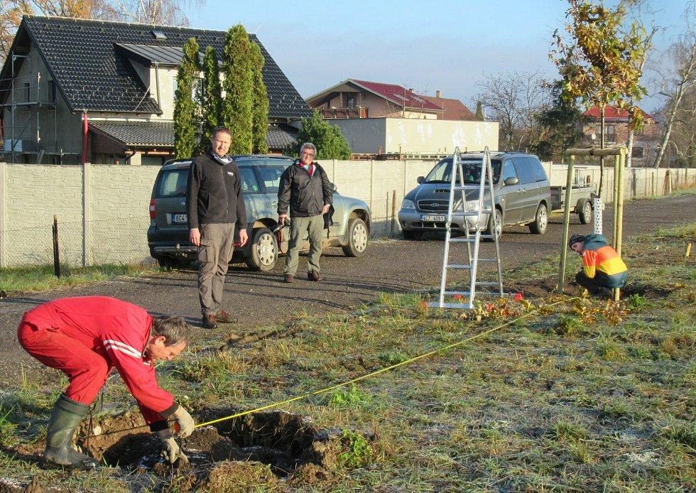 V sobotu 21. listopadu ve Veselí nad Lužnicí přibyla další zeleň, na výsadbu 40 dubů dohlížel zkušený dendrolog Miroslav Kohel.
