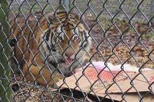Maskot táborské zoo oslavil 9. narozeniny.