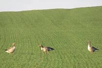V přírodě to opět žije a vše ukazuje, že už nastává pravé jaro. Na polích se objevily srny, husy, labutě i ještěrky.
