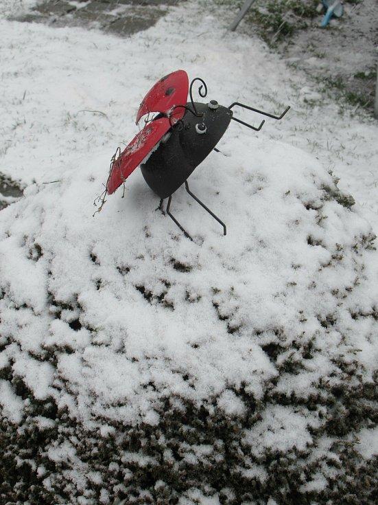 Sníh 6. dubna 2021 dopoledne na Táborsku stále padá.