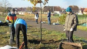 Skauti ve Veselí nad Lužnicí pomohli s výsadbou dubové aleje