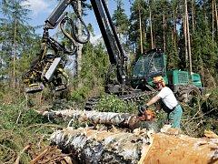 Těžba dřeva.